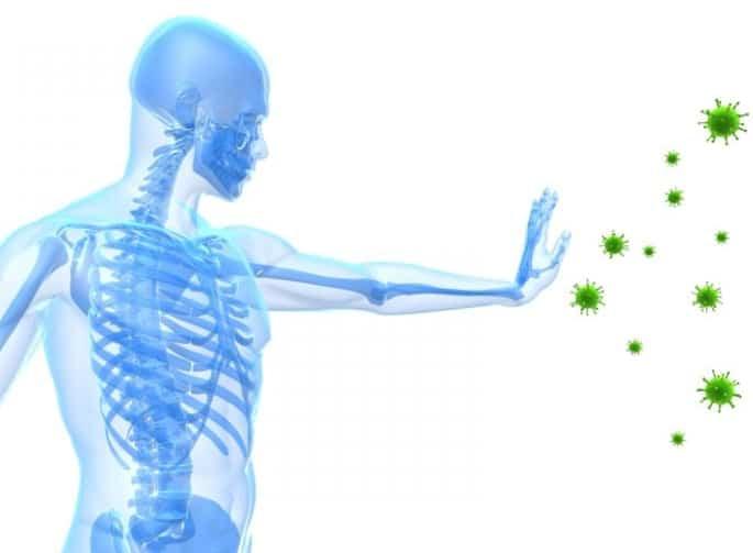 reishi mushroom immune system boost
